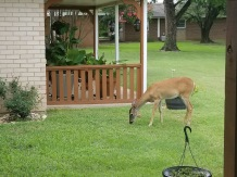 Amazing Day On Grandmom's Back Porch